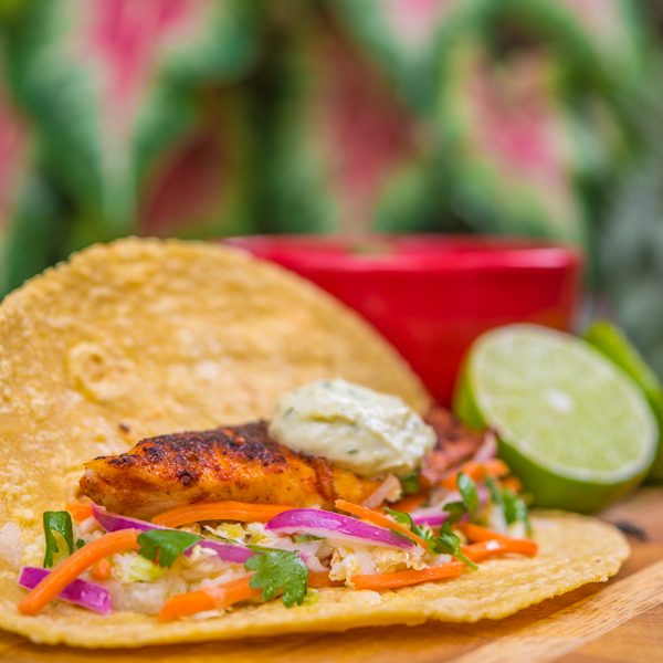 Blackened Tilapia Tacos with Jicama Coleslaw and Avocado Aioli